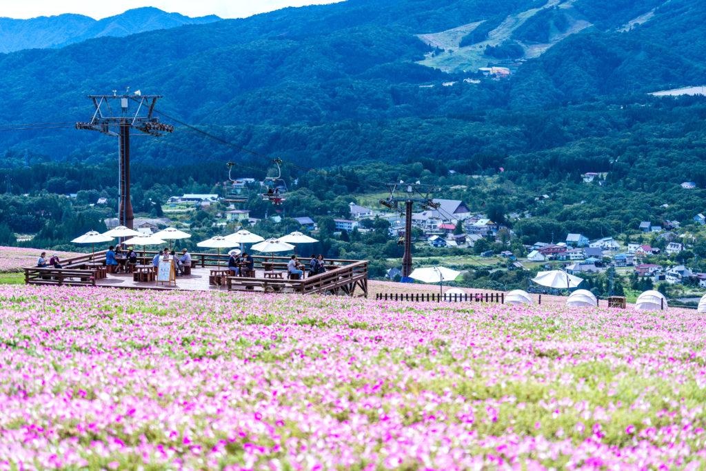 日本最大級4万株の桃色吐息を眺めながら一息「Momoiroテラス&カフェ」のイメージ