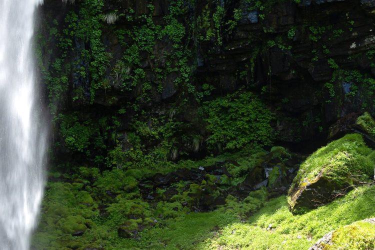 阿弥陀ヶ滝・白山文化博物館コース「ナチュラル&リラックス名瀑・阿弥陀ヶ滝と白山文化を訪ねるリトリートの旅」